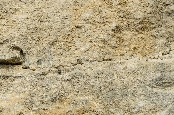 Sédimentologie de faciès au mont-rivel (Jura)-stylolithes
